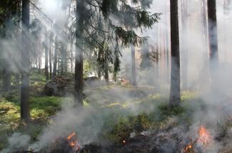 Пожароопасный сезон начался в Пензе. Спасатели предупреждают…