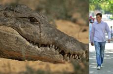Крокодилы депутата Воскресенского тоже плачут