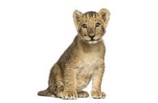 Пензенский лев наделал шуму в Казани