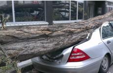 В Пензе в Арбеково легковушку смяло рухнувшее дерево