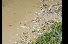 «Сурский апокалипсис». Под Пензой берег водоема усыпало дохлой рыбой