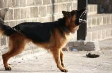 Cоцсети - Под Пензой собака вцепилась в лицо ребенку