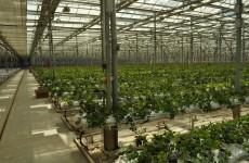 Теплицы, розы, Боринштейн… В Пензе продают крупный сельхоз актив