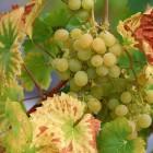 Жительница Пензы получила серьезные травмы, поскользнувшись на винограде...