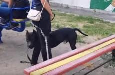 Соцсети - В Пензе девочка-тинейджер натравила питбуля на детей во дворе