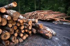 Браконьеры-гастролеры набедокурили в лесу под Пензой почти на полмиллиона