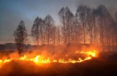 Пензенские спасатели потушили три природных пожара за минувшую неделю