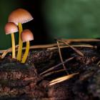 В Пензенской области пять человек отравились опасными грибами