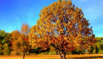 Завтра в Пензенской области будет тепло и без осадков