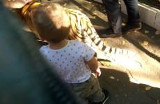 Соцсети - В пензенском зоопарке на мальчика набросился тигренок