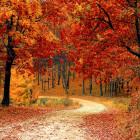 3 октября пензенцев ожидает небольшое потепление