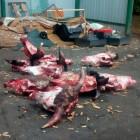 Пензенец сообщил об окровавленных черепах по середине дороги на Вяземского