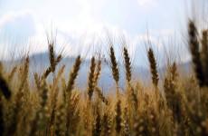 Приветы с Кавказа. Крупная пензенская агрофирма перешла под контроль банка «Траст» и начала получать крупные иски