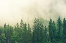 Бесследно исчезнувшую под Пензой девушку-подростка будут искать в лесу