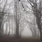 Синоптики обещают жителям Пензы туман и восточный ветер