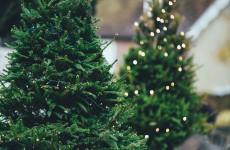 Город заработает на продавцах елок 1 миллион рублей