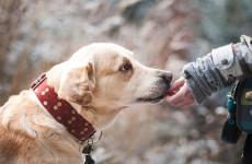 «Человек собаке друг»: жительница Пензы осталась без денег, пытаясь помочь раненому животному