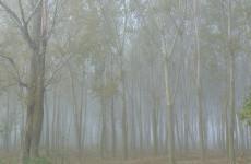 Какая погода ожидает пензенцев 10 ноября?