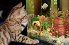 Жительница Пензенской области, пытаясь продать аквариум, осталась без денег