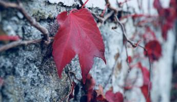 Какая погода ожидает пензенцев 15 ноября?