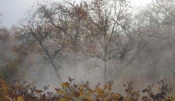 Какая погода ожидает пензенцев 17 ноября?
