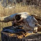 Жители Каменки станут соседями скотомогильника