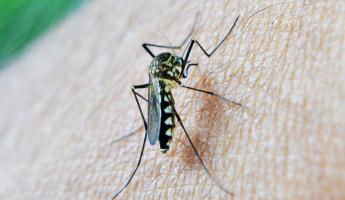 В Пензенской области впервые за 50 лет зарегистрирован случай тропической малярии