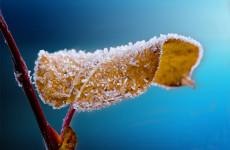 Синоптики обещают пензенцам мороз и метель