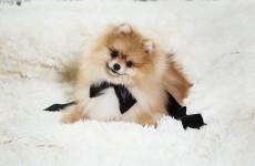 А собаки не будет? В Пензенской области молодую девушку обманули про покупке щенка