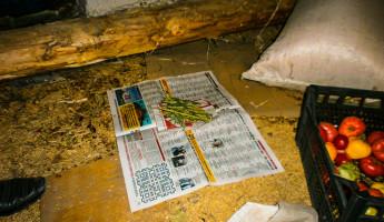 При обыске в квартире пензячки, полицейские нашли около 50 грамм запрещенного вещества