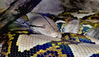 Молодая пензячка лишилась денег, мечтая купить змею