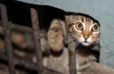 Пензенские спасатели пришли на помощь котенку, упавшему в вентиляционную шахту