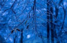 Какая погода ожидает пензенцев 14 декабря?