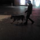 Экзотика. Домашних собак на улицах Пензы сменяют тигры