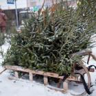 Казус Кувайцева. Почему Пенза в следующем году может остаться без елочных базаров?