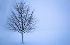 Завтра жителей Пензенской области ждет очередное похолодание