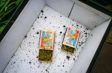 У жителя Сердобска нашли более 20 граммов наркотика