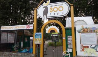 В эти выходные пензенцы смогут бесплатно посетить парки отдыха и зоопарк