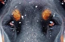 Прокуратура Бессоновского района начала расследовать дело о задушенной собаке