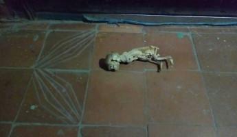 Страшная находка. Пензенцу под дверь подбросили скелет