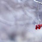 Завтра в Пензе и области похолодает до минус 13 градусов