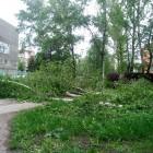 В Пензе у НИИ «Контрольприбор» начали пилить деревья