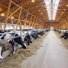 Пензенской области дополнительно выделят более 315 миллионов на развитие животноводства