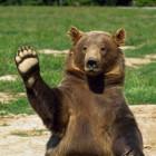 По Пензе разгуливает медведь