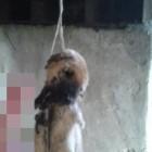 Живодеры из Пензенской области повесили собаку на мосту