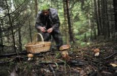 Пензенские волонтеры помогли найти заблудившегося в лесу инвалида